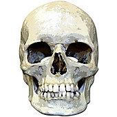Halloween Skull Mask - Cardboard