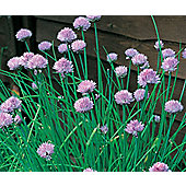 chives (chives)