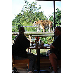Breakfast with the Big Cats - 2 for 1