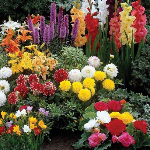 Summer Bulbs Mixture - 100 bulbs
