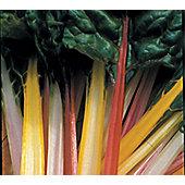 rainbow chard (leaf beet 'Rainbow Chard')