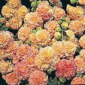 Hollyhock 'Peaches 'n' Dreams'® - 1 packet (35 seeds)