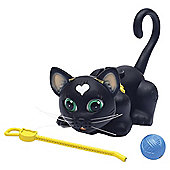 Pet Parade Single Kitten Pack - Black Cat