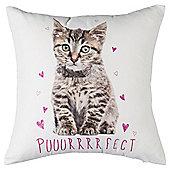Perfect Cat Cushion