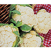cauliflower (cauliflower 'Igloo')