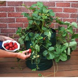 Greena Strawberry Planter
