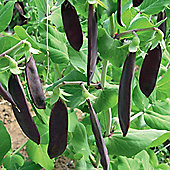 Pea 'Shiraz' (Mangetout) - 1 packet (100 pea seeds)