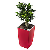 Terrastyle Algarve Tall Square Planter (Set of 2) - 35 cm H x 20 cm W x 20 cm D - Red