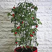 Tomato Patio Planter (Climbing) - 1 planter
