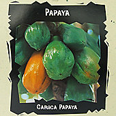 Papaya - Exotic Seed Collection - 1 packet (25 seeds)