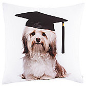 Academic Dog Cushion