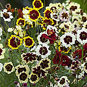 Coreopsis x hybrida 'Incredible' - 1 packet (200 seeds)