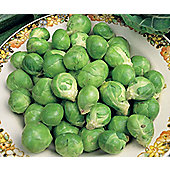 brussels sprout (brussels sprout 'Evesham Special')