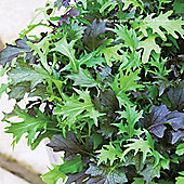 Salad Leaves 'Frilly Mixed' - 1 packet (1000 salad seeds)