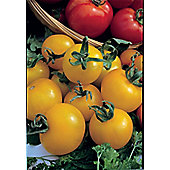 tomato (tomato 'Golden Sunrise')
