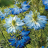 Nigella damascena 'Moody Blues' - 1 packet (600 seeds)