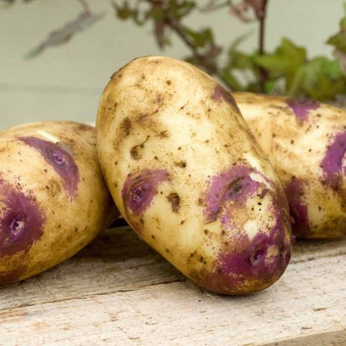 Potato 'Blue Belle' - 5 tubers