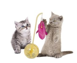 Aspen Pet Balance Ball Cat Toy in Yellow/Pink