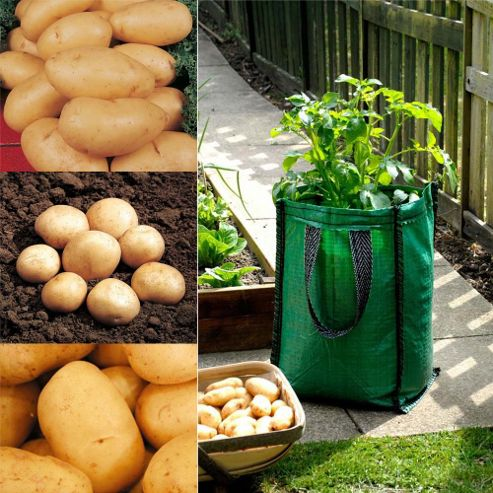 Potato Patio Planter Collection - 3 patio planters + 15 tubers - 5 of each variety
