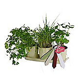 Inside Out Grow Your Own Herb Kit Including 3 Herb Pots with Tray and Seeds
