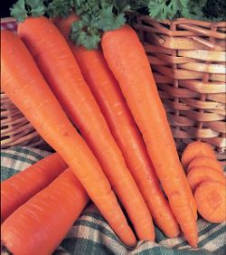 carrot (carrot James Scarlet Intermediate)