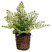 33Cm Maidenhair Fern In Round Twig Basket - Green