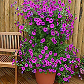 Petunia hybrida 'Purple Tower' F1 hybrid - 1 packet (30 seeds)