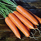 Carrot 'Eskimo' F1 Hybrid - 1 packet (450 carrot seeds)