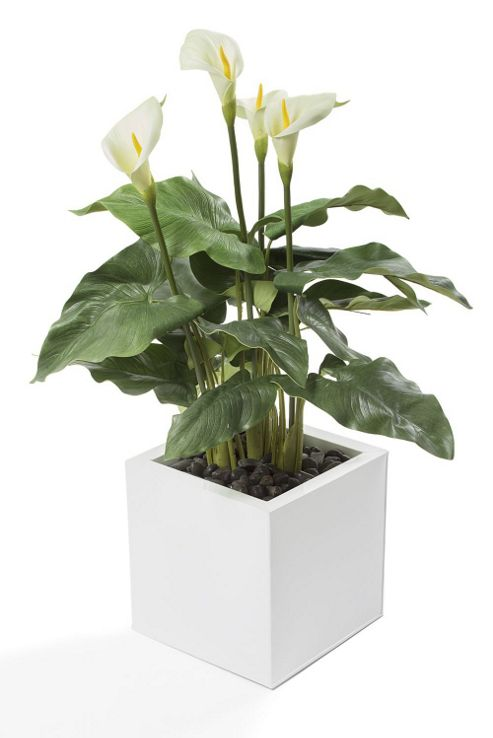 artificial 3ft lime green calla lily plant. Black Bedroom Furniture Sets. Home Design Ideas