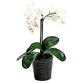 35Cm Real Touch Phalaenopsis In Black Ceramic Ribbed Pot - White