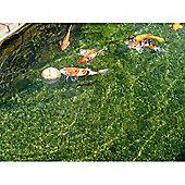 Savic Koi Fish Feeding Ball