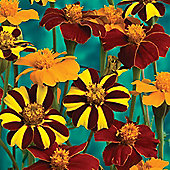 Marigold 'Pots of Gold' - 1 packet (100 seeds)
