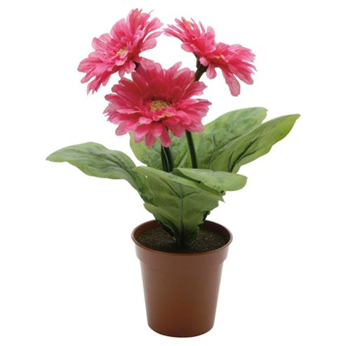 28cm Gerbera Potted Plant With 3 Flowers - Hot Pink
