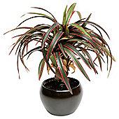 35Cm Yucca In Ceramic Pot - Red / Green