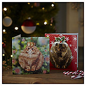Cat Baubles Christmas Cards, 10 pack