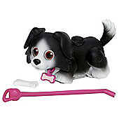 Pet Parade Single Puppy Pack - Border Collie