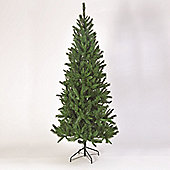 7ft Saskatchewan Spruce Tree