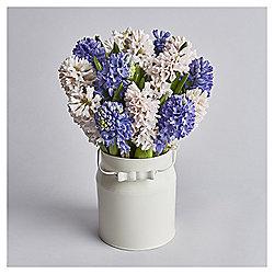 Hyacinth Abundance