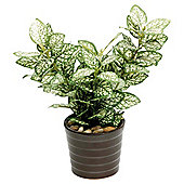 22CM HYPOESTES IN CERAMIC POT - GREEN / WHITE