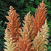 Amaranthus paniculatus 'Autumn Palette' - 1 packet (1000 seeds)