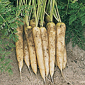Carrot 'White Satin' F1 Hybrid - 1 packet (350 carrot seeds)