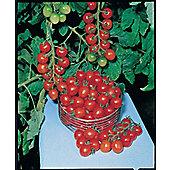 cherry tomato (tomato 'Gardeners Delight')