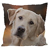 Puckator Scatter Cushion with Insert, Labrador Photo, 50x50cm