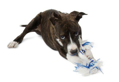 Aspen Pet Fresh 'N Floss 2Knot Bone Spearmint Dog Toy in Green - Large (12.7cm L x 7.62cm W x 33.02cm H)