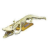 Science Time Skeleton Science Crocodile Skeleton