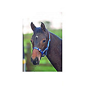 Cottage Craft Foal Headcollars - Standard - Blue