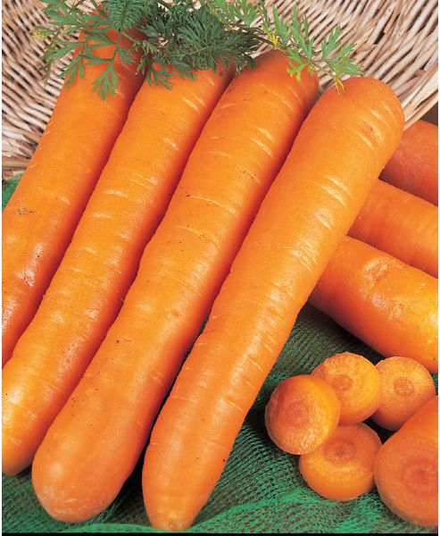 carrot (carrot 'Early Nantes')