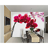 1Wall Giant Pink Orchid Wall Mural