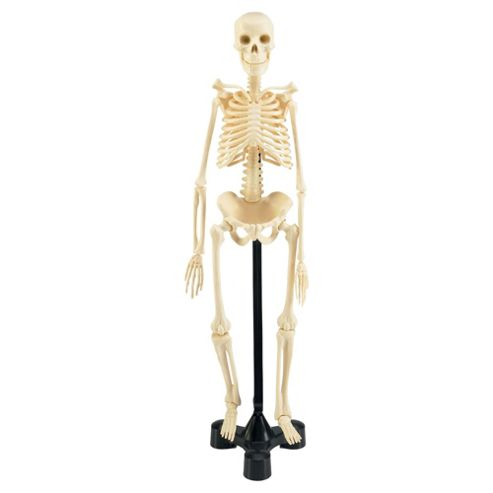 Revell X-Ray Human Skeleton Model