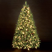 8ft Douglas Pine Pre-Lit Artificial Christmas Tree